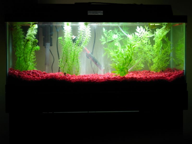 Our fish aquarium